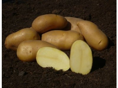 Colette - slovenské sadbové zemiaky 5kg