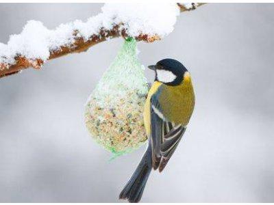 Lojové gule pre vtáky - 6x90g