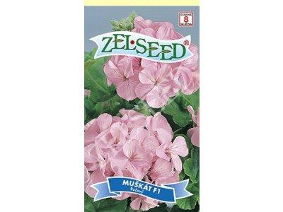 Pelargónia (Muškát) krúžkovaná F1 ružová 8sem Zelseed